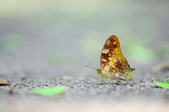 Yellow butterfly. In the garden from Thailand Stock Photos
