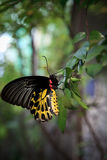 Yellow butterfly on green tree leaves Stock Images