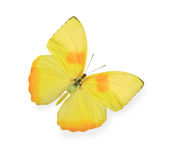 Yellow butterfly isolated. On white Royalty Free Stock Photography