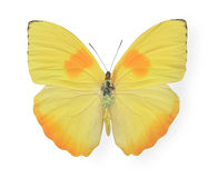 Yellow butterfly isolated on white Royalty Free Stock Image