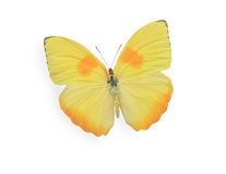 Yellow butterfly isolated on white Stock Photos