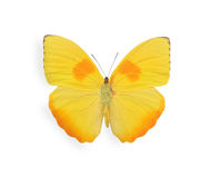 Yellow butterfly isolated on white Royalty Free Stock Images