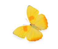 Yellow butterfly isolated on white Stock Photo