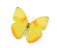 Yellow butterfly isolated on white Stock Image