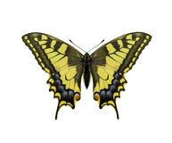 Yellow butterfly isolated on white background. Yellow butterfly isolated on a white background Stock Photos