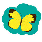 Yellow butterfly Pieridae Stock Images