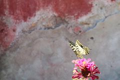 Yellow butterfly on pink flower wallpaper. Textured surface on background, free space royalty free stock photos