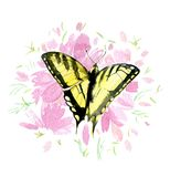 Yellow butterfly on pink flowers isolated on white background, watercolor Royalty Free Stock Image