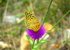 Yellow butterfly purple flower Stock Photo