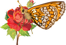 Yellow butterfly on red rose flower. Illustration with yellow butterfly on red rose flower Stock Photos