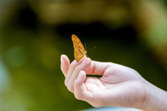 Yellow butterfly sitting on the girl hand. Stock Images