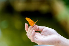 Yellow butterfly sitting on the girl hand. Royalty Free Stock Photos