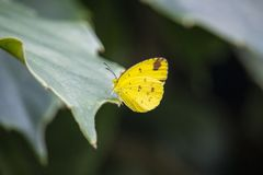 Yellow butterfly sitting on a leaf stock images