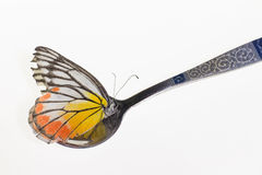 Yellow butterfly in spoon Royalty Free Stock Image