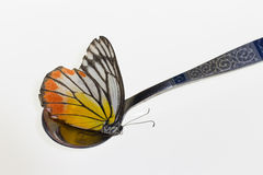 Yellow butterfly in spoon Royalty Free Stock Photos