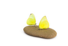 Yellow butterfly on stone with white Stock Photos