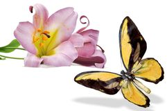 Yellow butterfly and tow violet lily Royalty Free Stock Images