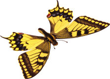 Yellow butterfly. On a white background stock images