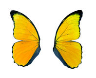 Yellow butterfly wing isolated on white background. Royalty Free Stock Image