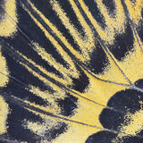 Yellow butterfly wing Royalty Free Stock Photos