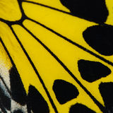 Yellow butterfly wing Stock Photography