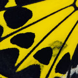 Yellow butterfly wing Stock Photo