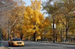 Yellow Cab in Central Park in New York City stock photo