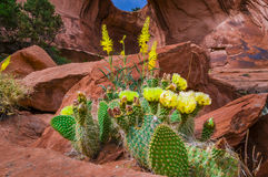 Yellow Cactus Under Bow Tie Arch Stock Photos