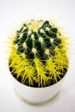 Yellow cactus in a white pot stock photo
