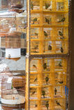 Yellow Cages For Birds. Yellow Plastic Cages With Birds at Market Royalty Free Stock Photos