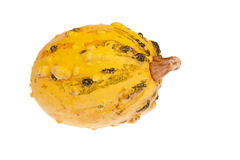 Yellow calabash with black bulbs Stock Image