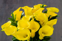 Yellow Calla lilies Stock Image