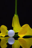 Yellow calla lily and golf ball on a black glass plate Stock Photography