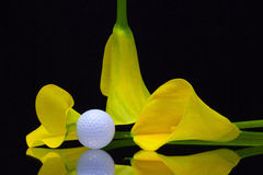 Yellow calla lily and golf ball on a black glass plate Stock Photos