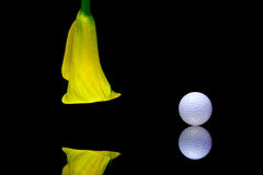 Yellow calla lily and golf ball on a black glass plate Royalty Free Stock Photos
