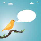 Yellow canary. Perched on a branch with speech bubble ready for text Royalty Free Stock Images