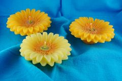Yellow candle flower. 3 yellow candle flower placed on blue table cloth Stock Photo