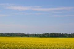 Yellow Canola Field. Bright yellow canola field under a bright blue sky stock photo