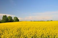 Yellow canola field Stock Photo