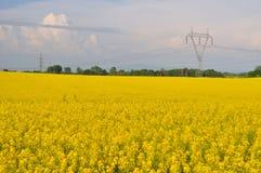Yellow canola field Royalty Free Stock Photo