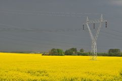 Yellow canola field Stock Photos