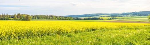 Yellow canola field panorama Royalty Free Stock Photos