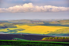 Yellow canola field in the summer Royalty Free Stock Photos