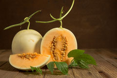 Yellow cantaloupe melon Royalty Free Stock Image