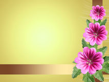 Yellow card with flowers mallow Stock Image