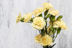 Yellow carnation flowers isolated on white wooden background Royalty Free Stock Photography