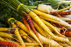 Yellow Carrots Stock Image