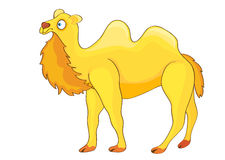 Yellow Cartoon Camel. Stock Image