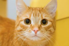 Yellow cat. Stock Photo