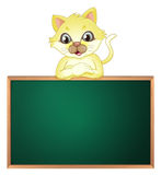 A yellow cat above the empty blackboard. Illustration of a yellow cat above the empty blackboard on a white background Royalty Free Stock Images